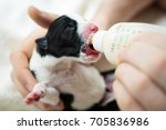 Newborn Puppy Closeup Drinking...