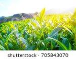 asia culture concept image  ... | Shutterstock . vector #705843070