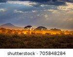 migration of elephants. herd of ... | Shutterstock . vector #705848284