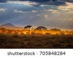 Migration Of Elephants. Herd O...