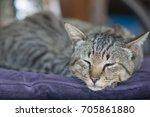Sleeping Siamese Cat On A Chai...
