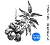 hand drawn pecan nuts branch...   Shutterstock .eps vector #705870523