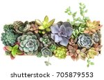 Top View Of Colorful Flowering...