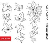 vector set with outline ivy or... | Shutterstock .eps vector #705924493