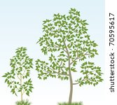 poplar tree | Shutterstock .eps vector #70595617