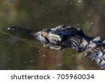 close up of a saltwater... | Shutterstock . vector #705960034