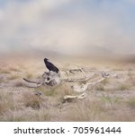 black vulture perches on... | Shutterstock . vector #705961444
