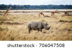 Small photo of Critically endangered black rhinoceros walking in the grasslands of Kenya, Africa with Masai giraffe in the background