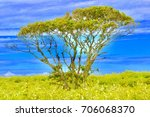 Small photo of Adam And Eve Mystical Tree On Green Field With A Blue Sky On Nantucket Island