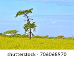 Small photo of Adam And Eve Mystical Tree On Nantucket Island