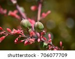 Red Yucca Succulent Plant ...