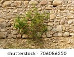 the bush of plant with red... | Shutterstock . vector #706086250