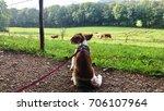 portrait of a cute welsh... | Shutterstock . vector #706107964