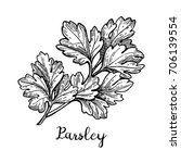 parsley ink sketch. isolated on ... | Shutterstock .eps vector #706139554
