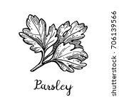 parsley ink sketch. isolated on ... | Shutterstock .eps vector #706139566