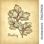parsley ink sketch on old paper ... | Shutterstock .eps vector #706139626