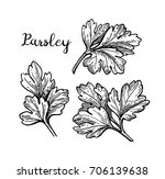 parsley ink sketch. isolated on ... | Shutterstock .eps vector #706139638