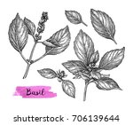 basil set. ink sketch isolated... | Shutterstock .eps vector #706139644