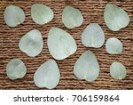 leaves of silver eucalyptus ... | Shutterstock . vector #706159864