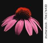 cone flower on black background | Shutterstock . vector #706176430