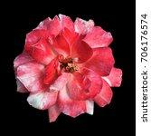 rose on a black background | Shutterstock . vector #706176574