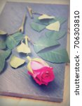 single rose cut up on piece of... | Shutterstock . vector #706303810