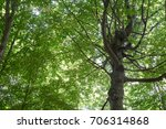 view in a tree crown from below ... | Shutterstock . vector #706314868