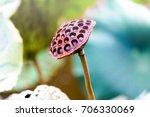 Lotus Seed Pod Close Up On