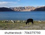 pan gong lake | Shutterstock . vector #706375750