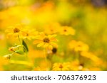 Yellow Flowers In A Meadow...