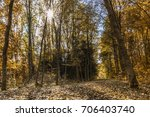Autumn Colorful Leaves On The...