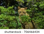 animal life | Shutterstock . vector #706466434