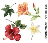 Stock photo hibiscus flowers watercolor can be used as greeting card invitation card for wedding birthday 706481158