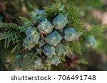 Graind Of Cypress