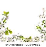 cherry tree flowers half frame... | Shutterstock . vector #70649581