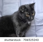 black cat with a small white... | Shutterstock . vector #706525243
