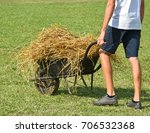 hay transport by wheelbarrow | Shutterstock . vector #706532368