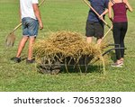 hay transport by wheelbarrow  | Shutterstock . vector #706532380