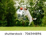 Stock photo dog jumping high to catch basketball ball 706544896