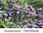 gardening | Shutterstock . vector #706550638