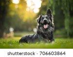 amazing portrait of young... | Shutterstock . vector #706603864