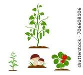 mushrooms  strawberries  corn ... | Shutterstock .eps vector #706608106