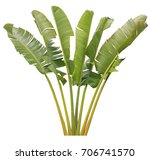 banana leaf on isolate and...   Shutterstock . vector #706741570