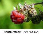 rubus idaeus  raspberry  also... | Shutterstock . vector #706766164