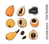 hand drawn sketch loquat fruit... | Shutterstock .eps vector #706784008