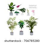 vector pot plants illustration. ... | Shutterstock .eps vector #706785280
