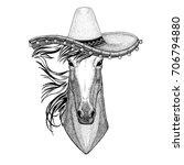 Horse  Steed Wearing Sombero...