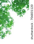 white with green leaves on the... | Shutterstock . vector #706831120