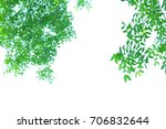 green leaves on white... | Shutterstock . vector #706832644