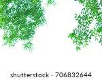 green leaves on white... | Shutterstock . vector #706832644